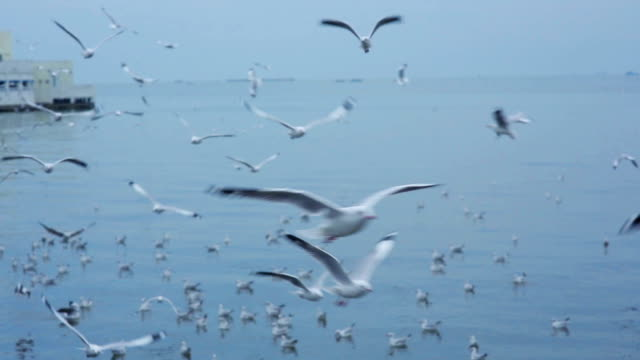 large flock of seagulls flying at beach on island - seagull stock videos & royalty-free footage