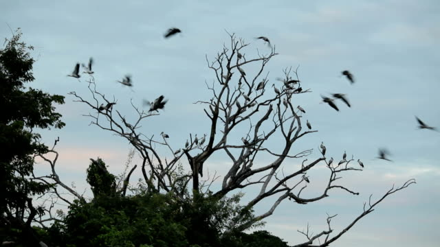 Large group of birds and tree in the sky