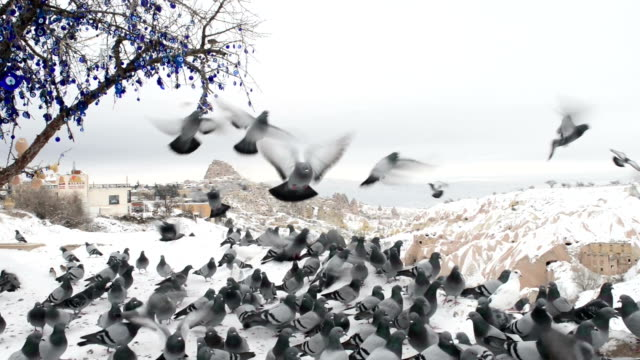 Large group of Doves flying in a winter day in Turkey