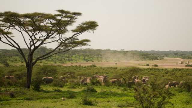 Large group of elephant on an african plain