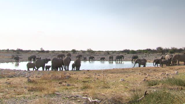 WS PAN Large group of elephants gather around water hole to drink water at Etosha National Park, Namibia / Kunene Region, Namibia