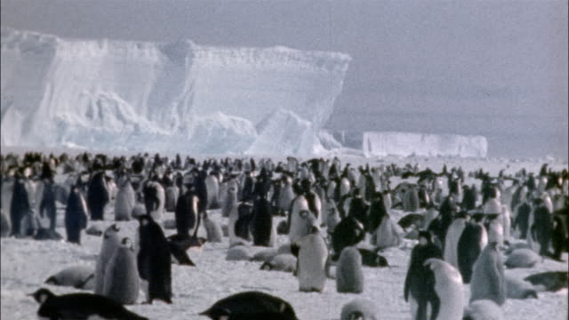 stockvideo's en b-roll-footage met ws, large group of emperor penguins on snow, antarctica - establishing shot