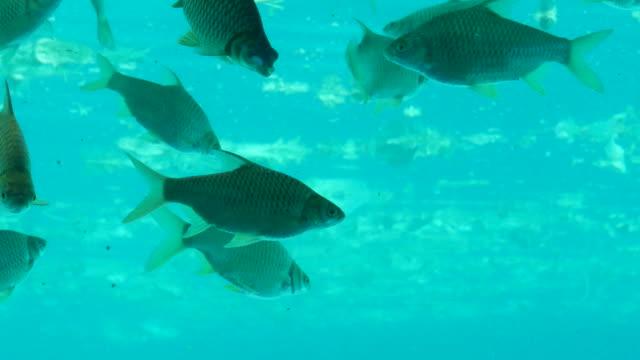 Große Gruppe von Fischen