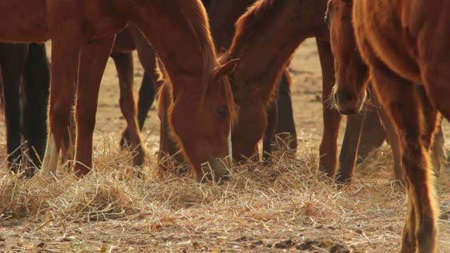 large group of horses - arbetsdjur bildbanksvideor och videomaterial från bakom kulisserna