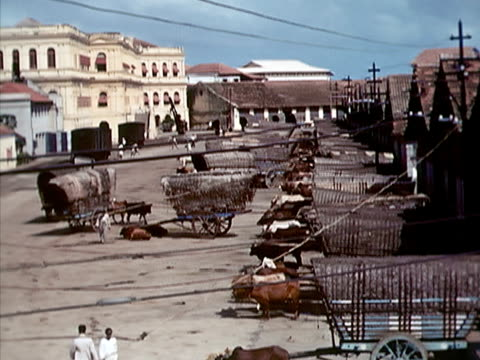 1939 ha ws large group of ox-drawn wagons and oxen/ colombo, sri lanka  - pferdeantrieb stock-videos und b-roll-filmmaterial