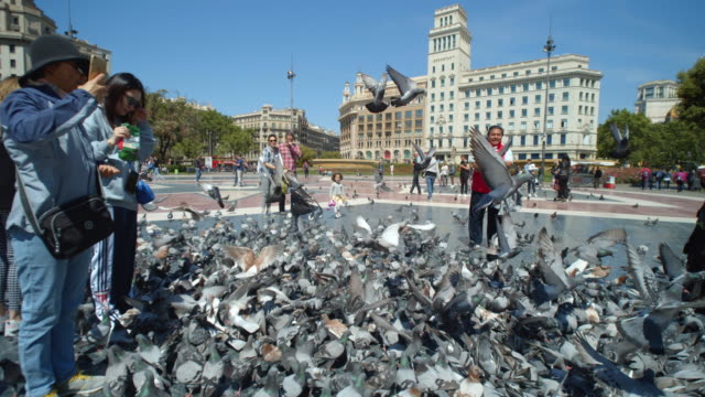 vídeos de stock e filmes b-roll de large group of pigeons at barcelona plaça catalunya square. tourist feeding the birds - alimentar
