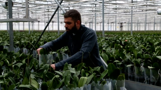 Large group of potted plants with a worker