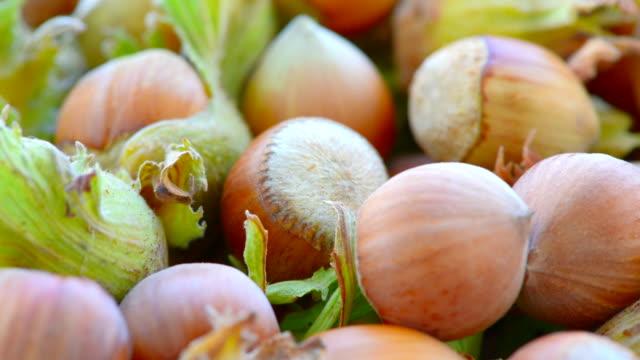 large hazelnuts - nutshell stock videos & royalty-free footage