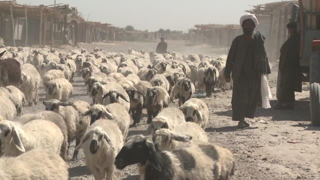 vídeos de stock, filmes e b-roll de a large herd of sheep walks down a dirt street in afghanistan. - helmand