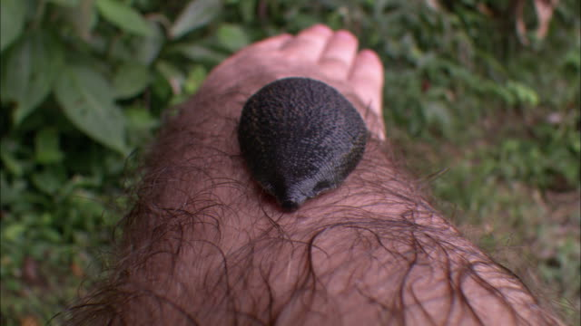 a large leech slithers along a man's arm. - leech stock videos & royalty-free footage