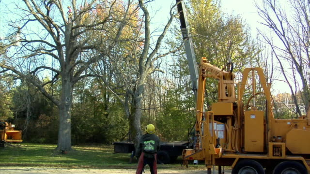 vídeos y material grabado en eventos de stock de ws td large limb cut out from tree being lowered to ground by crane, ann arbor, michigan, usa - ann arbor