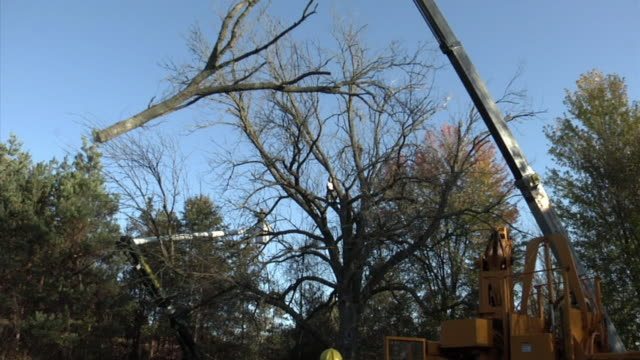 vídeos y material grabado en eventos de stock de ws large limb cut out from tree being lowered to ground by crane, ann arbor, michigan, usa - ann arbor