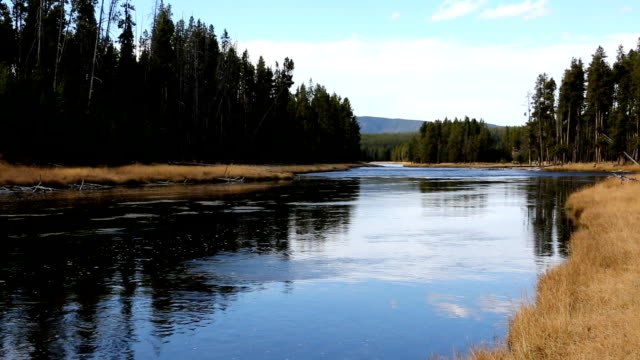 large mountain river in forest - river yellowstone stock videos & royalty-free footage