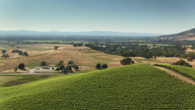 Large Northern California Vineyard on Hazy Day - Drone Shot