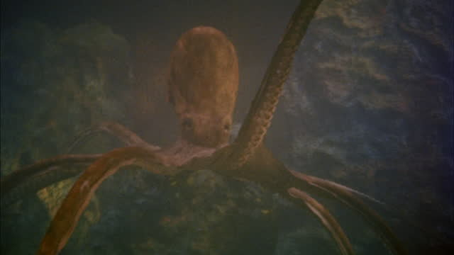 a large octopus moves its tentacles while underwater. - tentacle stock videos & royalty-free footage