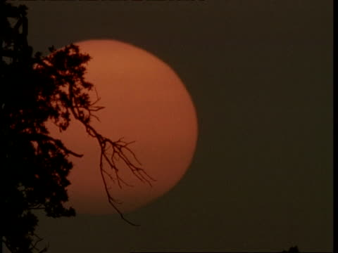 MS Large orange sun rising behind silhouetted tree branches, oriental looking, England