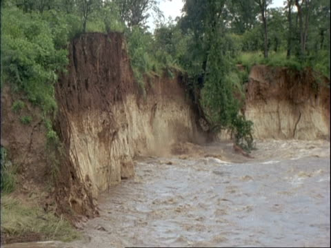 vidéos et rushes de mwa large piece of rocky bank crumbling and falling into river, swollen from flood water, vegetation growing along top of rocks, mana pools, zimbabwe - érodé