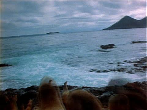 a large pod of seals scrambles over rocks into the ocean. - wassersäugetier stock-videos und b-roll-filmmaterial