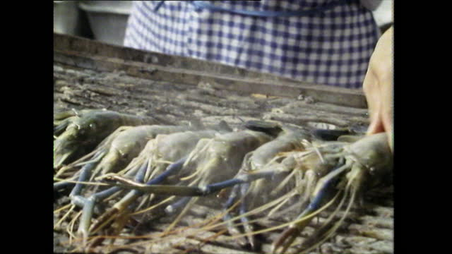 large prawns being placed on a barbecue grill; 1989 - grigliare video stock e b–roll