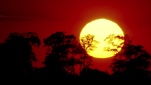 ws pan large red sun ball passing behind silhouetted trees / dicot, oxfordshire, england - oxfordshire video stock e b–roll