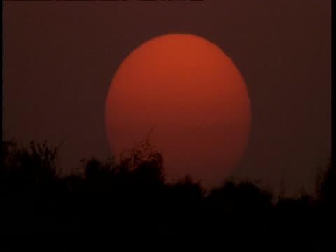 ms large red sun setting behind bush, dusk, gujarat, india - グジャラート州点の映像素材/bロール