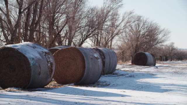 stockvideo's en b-roll-footage met large round bales of hay covered with snow lie at the edge of a farm field in winter. - vijf dingen