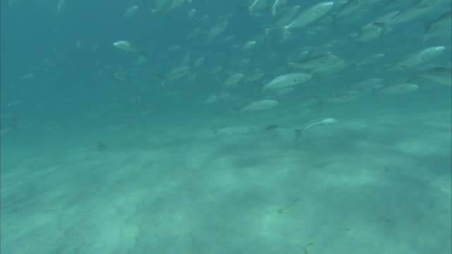 a large school of fish glides along a sandy seabed. - trade union stock videos & royalty-free footage
