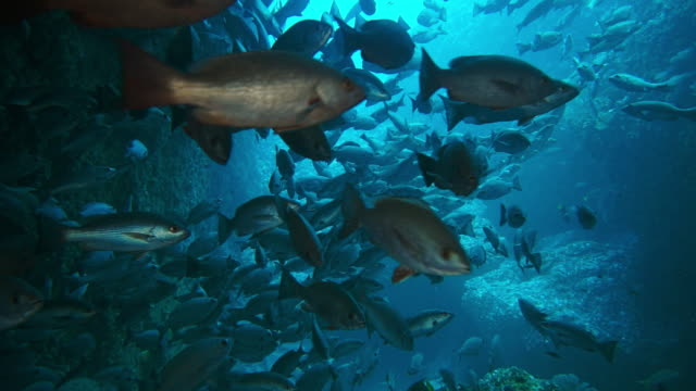 large school of fish hiding in a cavern, underwater shot - colombia stock videos & royalty-free footage