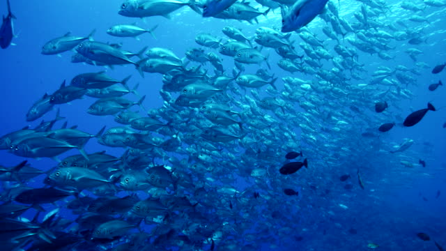 large school of fish off edge of reef in slow motion - school of fish stock videos & royalty-free footage