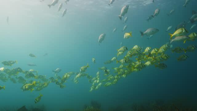 vídeos y material grabado en eventos de stock de large schools of fish over reef - playa del carmen