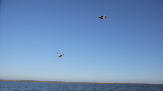 large sea birds flying over water - 2匹点の映像素材/bロール