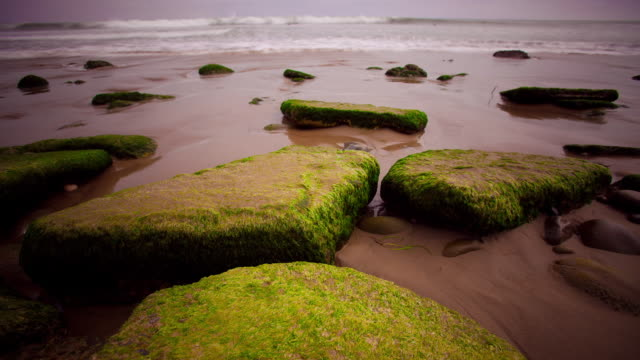 large seaweed covered rocks on beach shore with flashes of water lapping up receding surfer figures speed by and disappears into ocean - receding tide stock videos & royalty-free footage