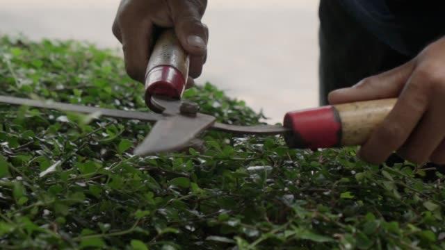 vídeos de stock, filmes e b-roll de lâminas da tesoura grande para aparar o ramo - tesoura