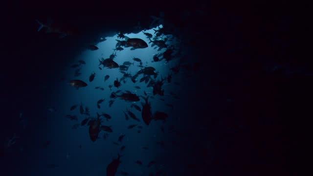large shoal of fish, ascension island. - squirrelfish stock videos & royalty-free footage