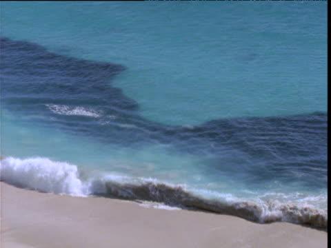 large shoal of sardines near coast, shark bay, western australia - seicht stock-videos und b-roll-filmmaterial
