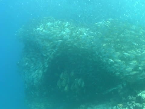 large shoal or bait ball of silver fish ms, small banner fish shoal under main bait ball - 少於10秒 個影片檔及 b 捲影像