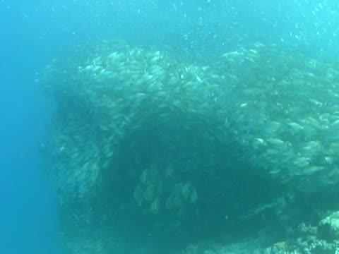 vídeos y material grabado en eventos de stock de large shoal or bait ball of silver fish ms, small banner fish shoal under main bait ball - menos de diez segundos
