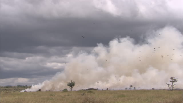 WS, Large smoke cloud from fire, rising and passing over plains, Africa