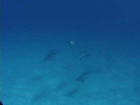 vídeos y material grabado en eventos de stock de large social group of bottlenose dolphins - grupo pequeño de animales