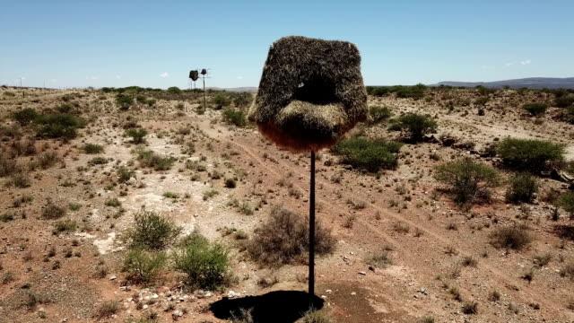 large social weaver bird nests on telegraph poles. kalahari region.  south africa - animal nest stock videos & royalty-free footage