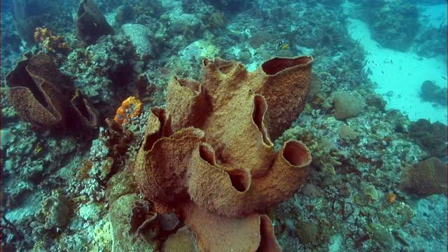 vídeos y material grabado en eventos de stock de ms, large sponge and coral reef, saint lucia - esponja