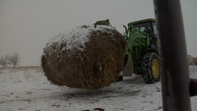 a large tractor drives away from camera loaded with hay bales in the wintertime. - hay stock videos and b-roll footage