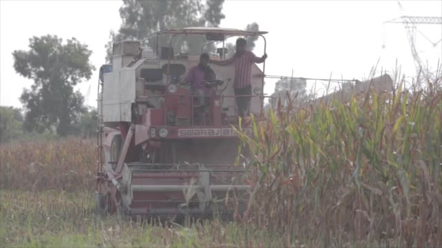 large tractor is driven through a field by two farmers in punjab, india to harvest the grown crops. - punjab region stock-videos und b-roll-filmmaterial