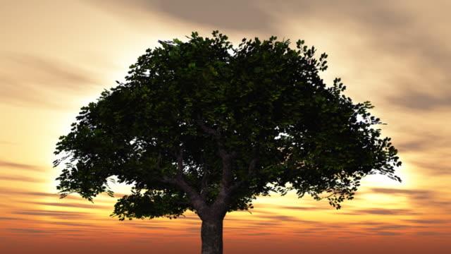 stockvideo's en b-roll-footage met large tree at sunset - enkel object