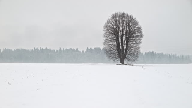 large tree in a meadow in winter, spring, summer and fall - single tree stock videos & royalty-free footage