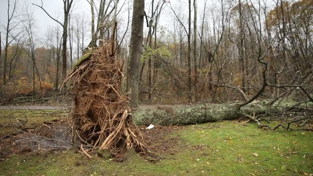 a large tree is fallen along popcorn road after a severe autumn thunderstorm which may have included a tornado passed through sunday november 5 2017... - november stock videos & royalty-free footage