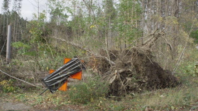 stockvideo's en b-roll-footage met ms large tree uprooted by superstorm sandy with roots and earth exposed / north castle, new york, united states - stroomuitval