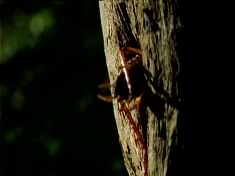 large tree weta enters crevice in tree, new zealand - crevice stock videos & royalty-free footage