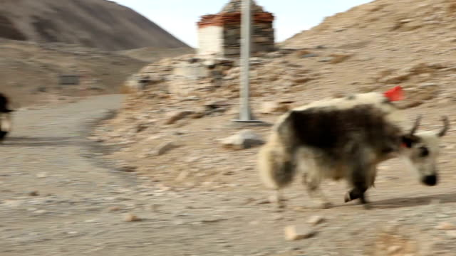 large yak on side of road in tibet china in winter - yak stock videos & royalty-free footage