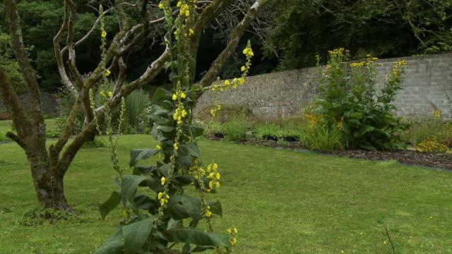 large yellow alyssum bush in yard - tentacle stock videos & royalty-free footage